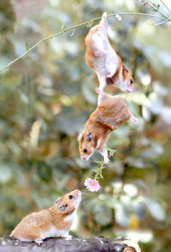 Image of Mice Dangling and holding a Flower