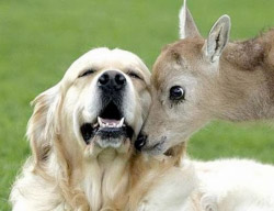Image of a Deer and Dog